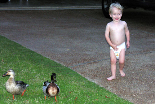 "Mac with 2 ""quack quacks"" in his yard!"